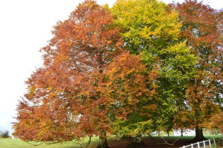 Westonbirt Arboretum Autumn colours October 30 2012 016