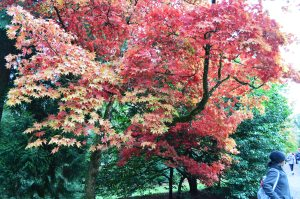 Westonbirt Arboretum Autumn colours October 30 2012 021
