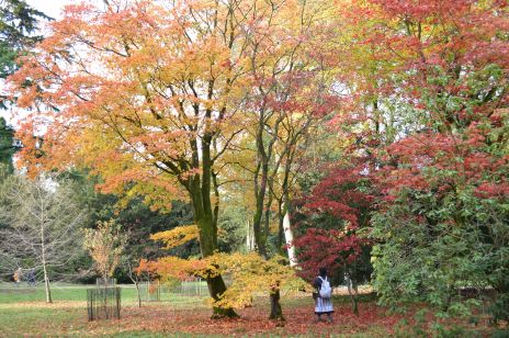 Westonbirt Arboretum Autumn colours October 30 2012 050