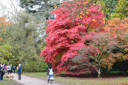 Westonbirt Arboretum Autumn colours October 30 2012 062
