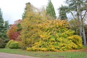 Westonbirt Arboretum Autumn colours October 30 2012 228